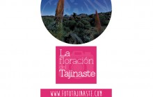 """I Concurso fotográfico """"La floración del Tajinaste"""". Coorganizado por Bodega Reverón"""