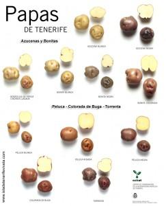 papas-de-Tenerife