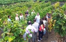 Cata de uvas y vinos en Bodegas Viñátigo