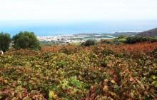 El Gobierno canario busca potenciar Canarias como destino enoturístico
