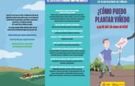 ¿Cómo puedo plantar viñedos?. Nuevas normas de el MAGRAMA