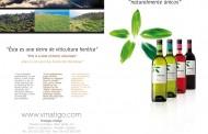 Bodegas Viñátigo ya elabora su gama de vinos clásicos bajo la protección de la DOP Islas Canarias.