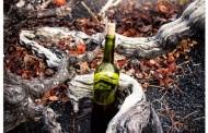 El Cabildo de Lanzarote convoca el XVI Concurso Insular de Catas de Vinos Artesanales y X Jornadas Vitivinicolas