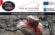 La poda del cordón trenzado en la D.O. Valle de La Orotava