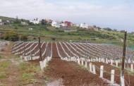La espaldera sencilla reina ahora en el paisaje vitivinícola