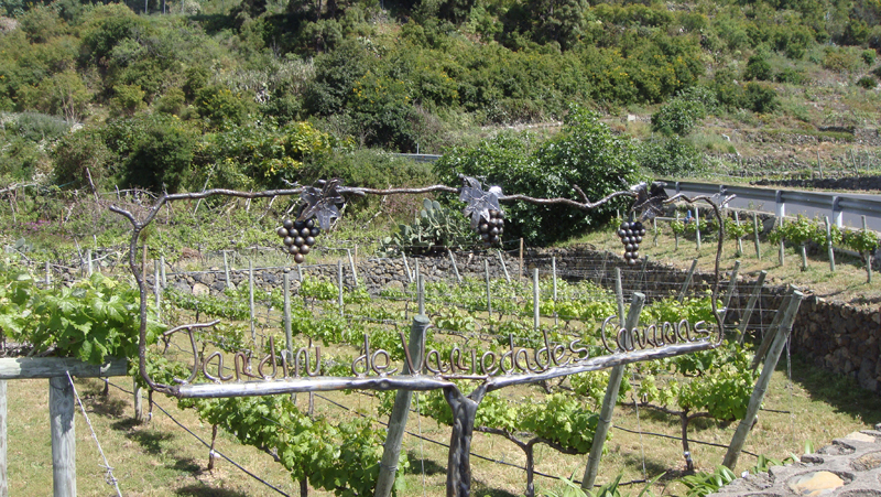 Cata de uvas y vinos en Bodegas Viñátigo. Master Class exclusiva dirigida a profesionales