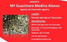 Charla de El olivo: experiencia como cultivo alternativo en Tenerife