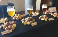 Maridaje de Papas Antiguas de Canarias y cervezas