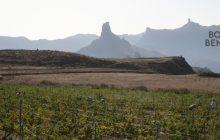 Desde el corazón de Gran Canaria, AGALA