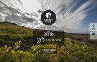Canary Wine consolidando mercado