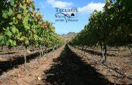 Distinción de Vinos de Tegueste 2016