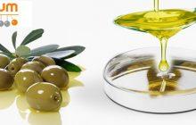 El olivo y la cicatrización de heridas