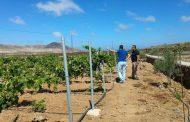 La primera bodega de Fuerteventura