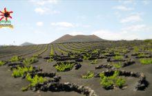 Los vinos de Lanzarote triunfando en el exterior