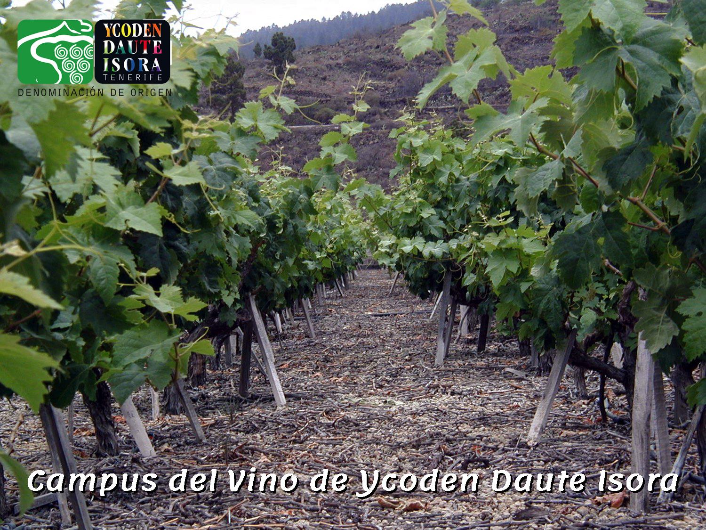 Campus del Vino de Ycoden Daute Isora