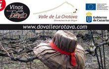 D.O.P. Valle de La Orotava, en crecimiento
