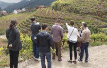Importadores norteamericanos con Canary Wine