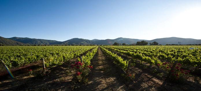 ProChile recibe el galardón Voice of Wine 2017