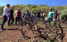 La ULL reúne a las bodegas que desarrollan enoturismo en Canarias