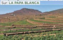 Manjares gastronómicos del jable del sur: La Papa Blanca