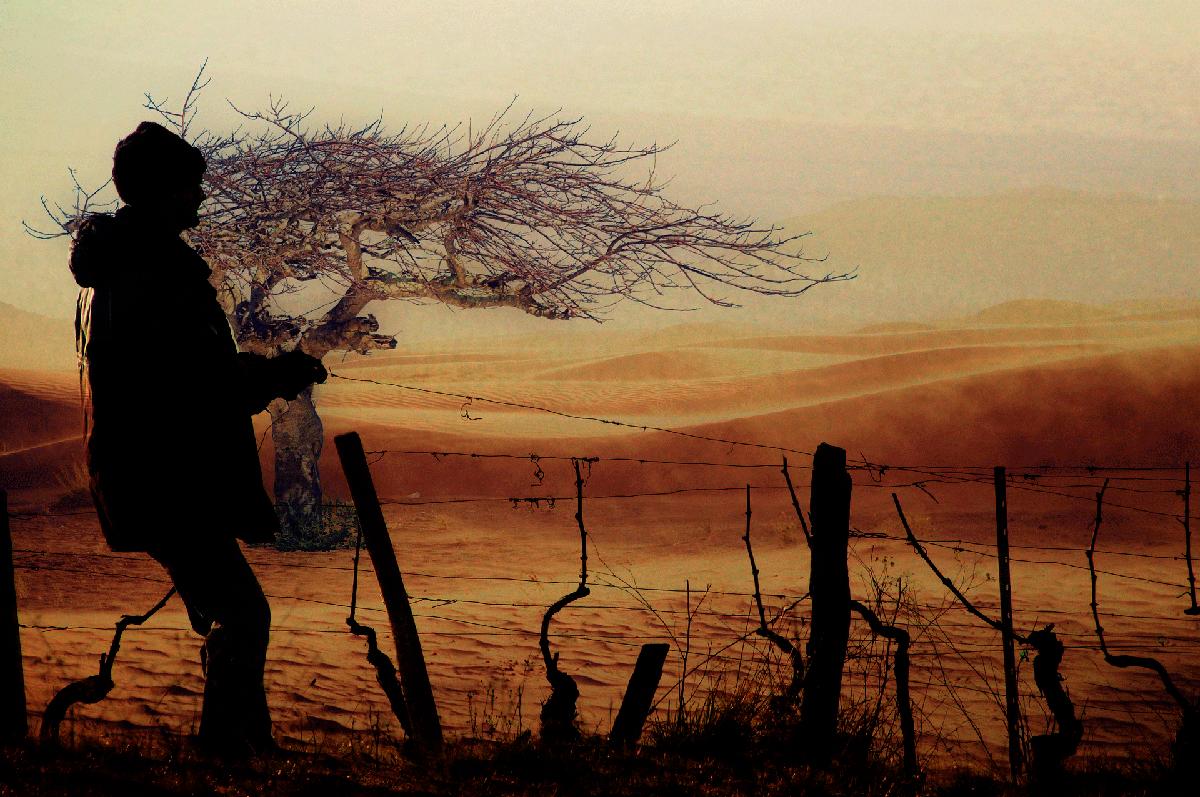 Cambio climático y viticultura: algunos apuntes