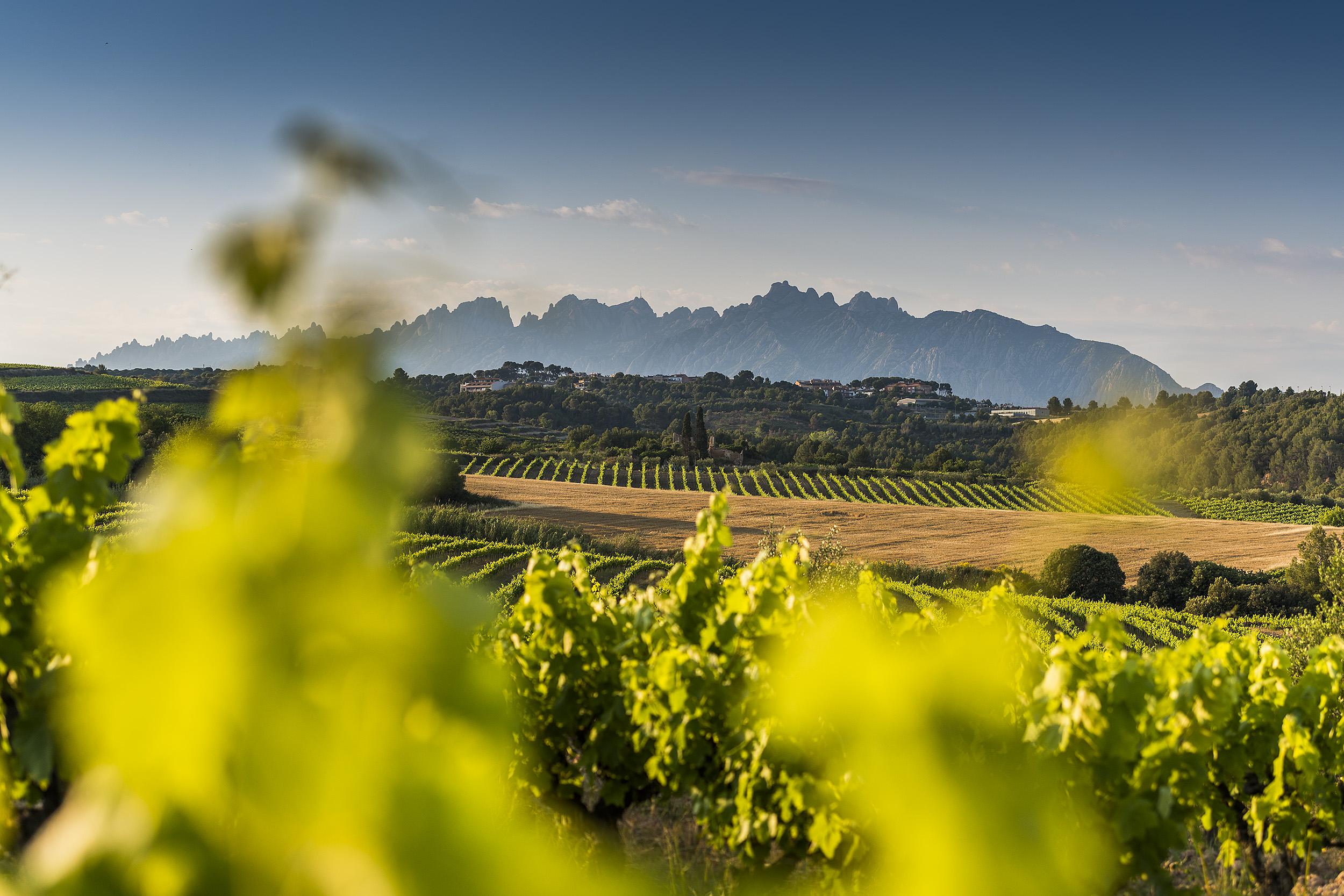 A.T. Roca, vinos de paisaje
