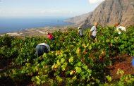 El Cabildo de El Hierro subvenciona la producción de uva
