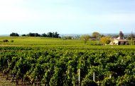 El valor del viñedo francés es nueve veces superior al español