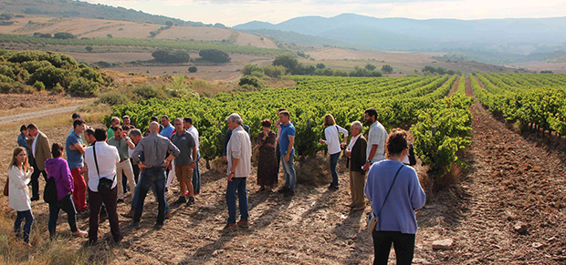 Smart Sustainable Wine Navarra