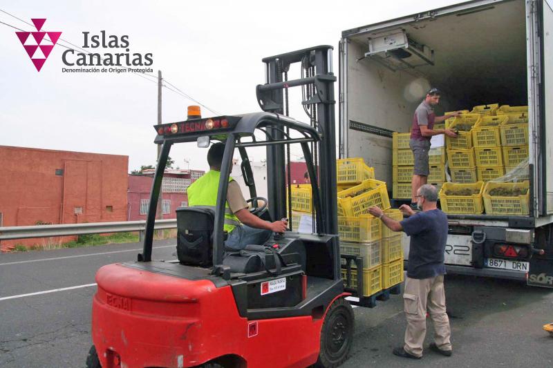 La DOP Islas Canarias supervisa la entrada del excedente de uva de Lanzarote en Tenerife