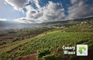Canary Wine. El futuro del vino canario.