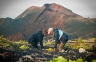 D.O. La Palma. Informe de Vendimia año 2015