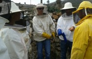 El Cabildo de Lanzarote contribuye al impulso de la apicultura en la isla