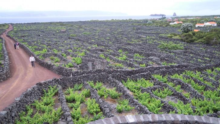 La Universidad de La Laguna traslada su experiencia en enoturismo a Azores