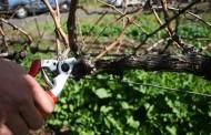 Charla sobre los trabajos de la viña en invierno