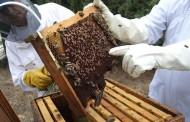 El Gobierno de Canarias concede 122.000 euros en subvenciones a la apicultura