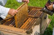 Subvenciones para promover la investigación en el sector apícola