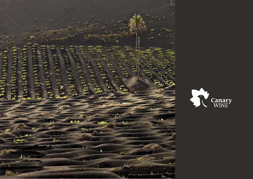 La DOP Islas Canarias profundiza en la comercialización de vinos en Canadá y Estados Unidos