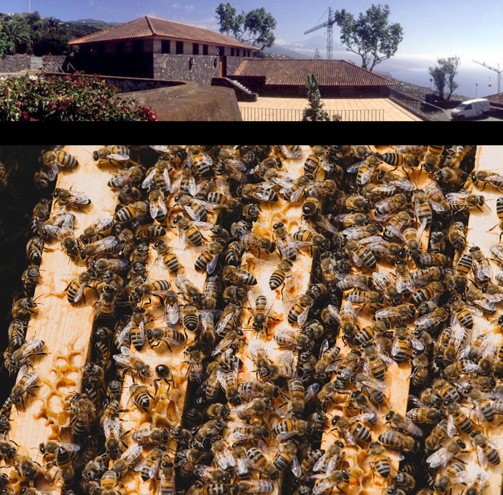 Curso de Técnicas de multiplicación del colmenar con introducción de realeras en la Casa de La Miel de Tenerife
