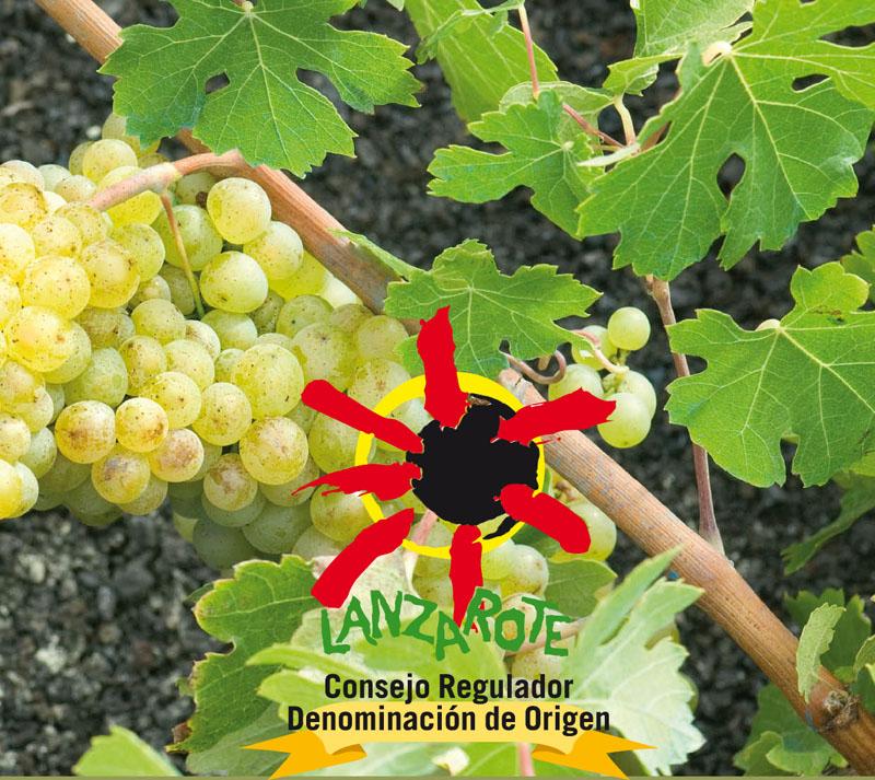 Finalizan los cursos de Manipulador de productos fitosanitarios impartidos por el Consejo Regulador de la DO Vinos de Lanzarote.