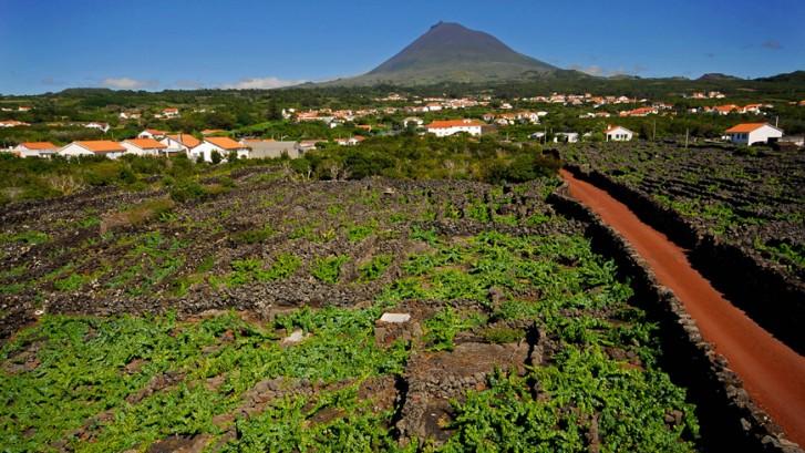 Azores, territorio vitivinícola invitado en la próxima edición del Concurso Internacional de Vinos del Atlántico