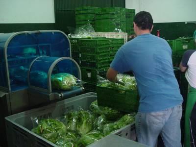Colegios canarios participarán en un proyecto piloto promovido por el Gobierno para incrementar el consumo de productos locales