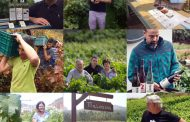 PHE FESTIVAL, marco idóneo para el CANARY WINE