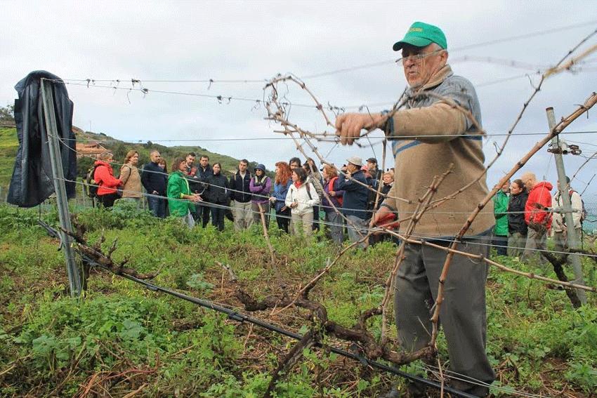 Ruta eno-histórica por bodegas y viñedos de la Villa de Tegueste