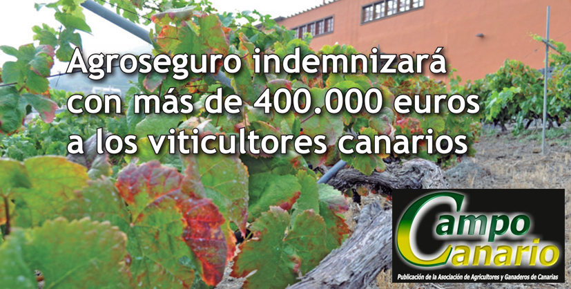 400.000 € a los viticultores canarios