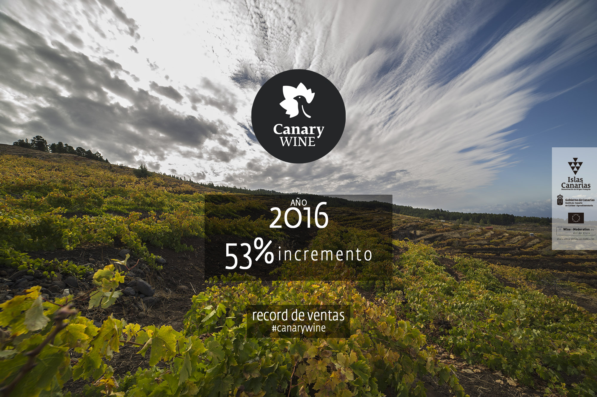 Canary Wine consolidando mercado