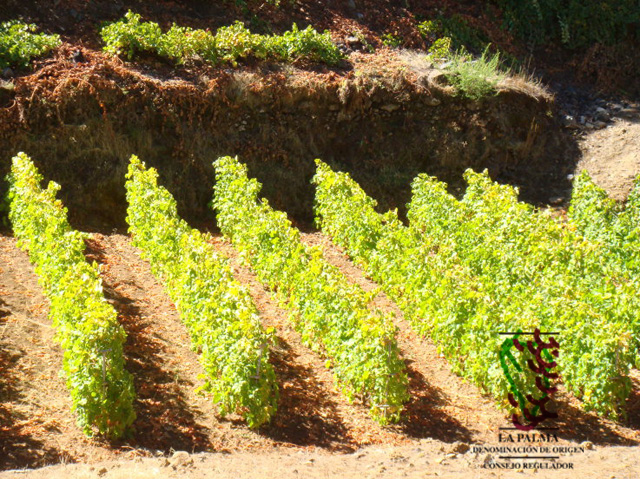 XVII Concurso de Vinos con D.O.P. La Palma