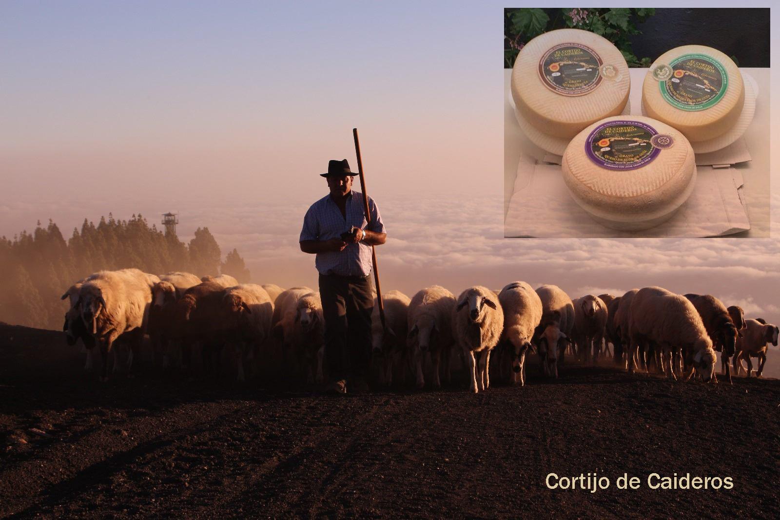 Cortijo de Caideros, un queso Flor de Guía, elegido Mejor Queso de Canarias 2017