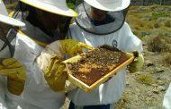 Subvenciones a la apicultura