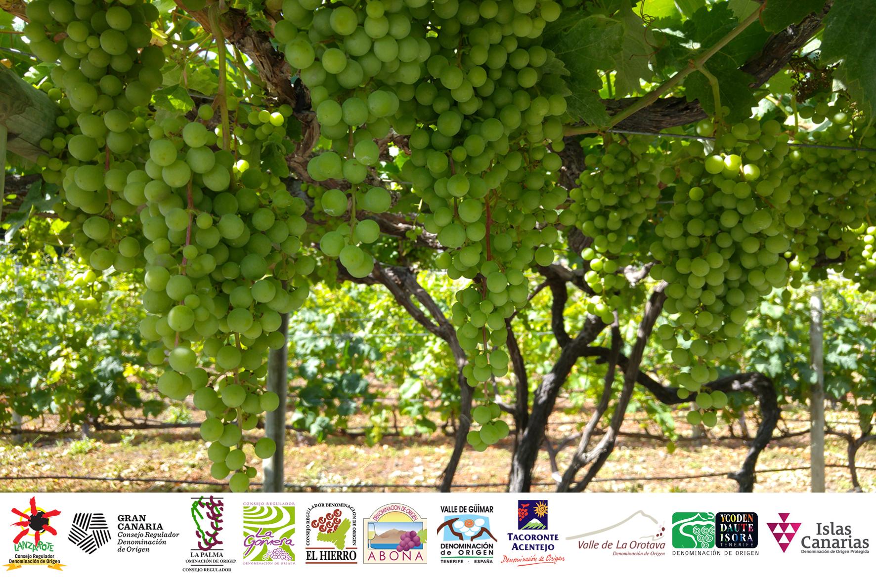 El Gobierno de Canarias paga ayudas a los consejos reguladores de vinos
